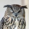 Falkner HoWe 20150525 039.jpg