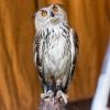 Falkner HoWe 20150523 037.jpg